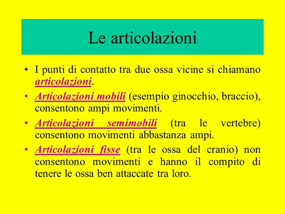Le articolazioni I punti di contatto tra due ossa vicine si chiamano articolazioni.