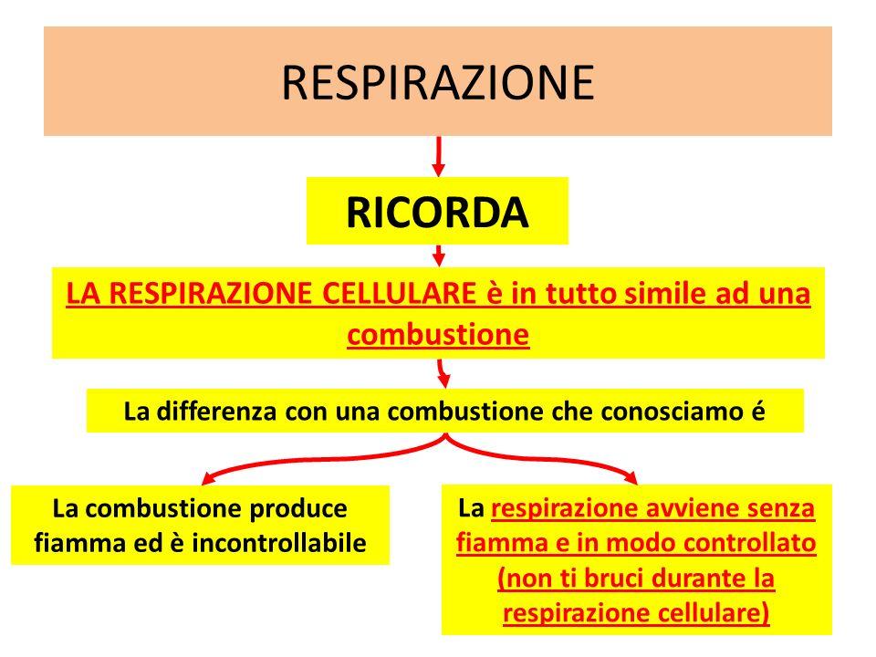 RESPIRAZIONE RICORDA. LA RESPIRAZIONE CELLULARE è in tutto simile ad una combustione. La differenza con una combustione che conosciamo é.
