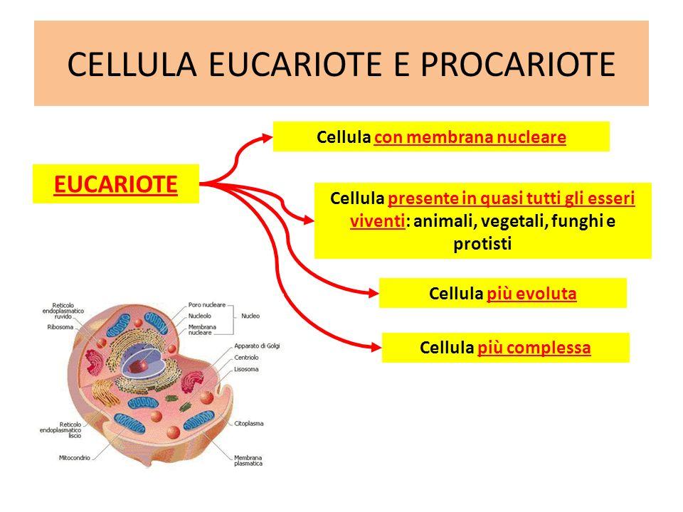 CELLULA EUCARIOTE E PROCARIOTE