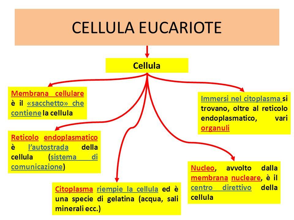 CELLULA EUCARIOTE Cellula