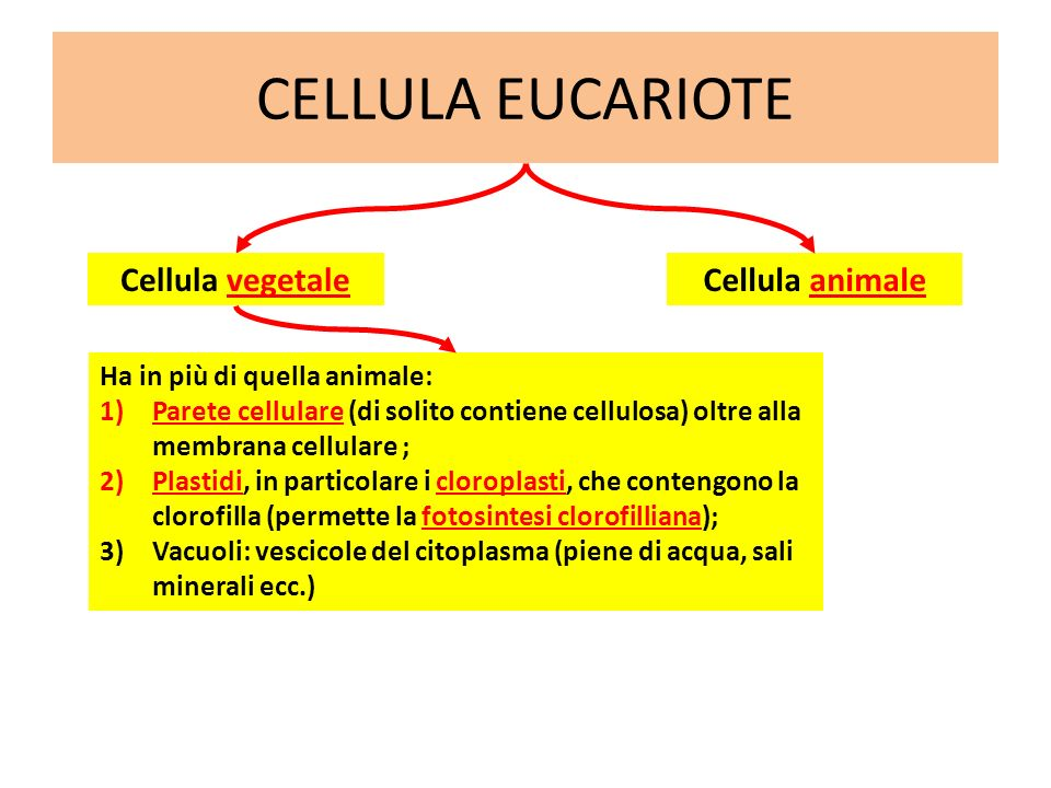 CELLULA EUCARIOTE Cellula vegetale Cellula animale