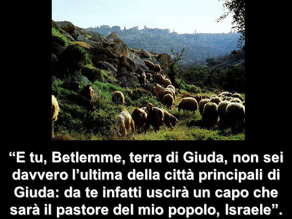 E tu, Betlemme, terra di Giuda, non sei davvero l'ultima della città principali di Giuda: da te infatti uscirà un capo che sarà il pastore del mio popolo, Israele .