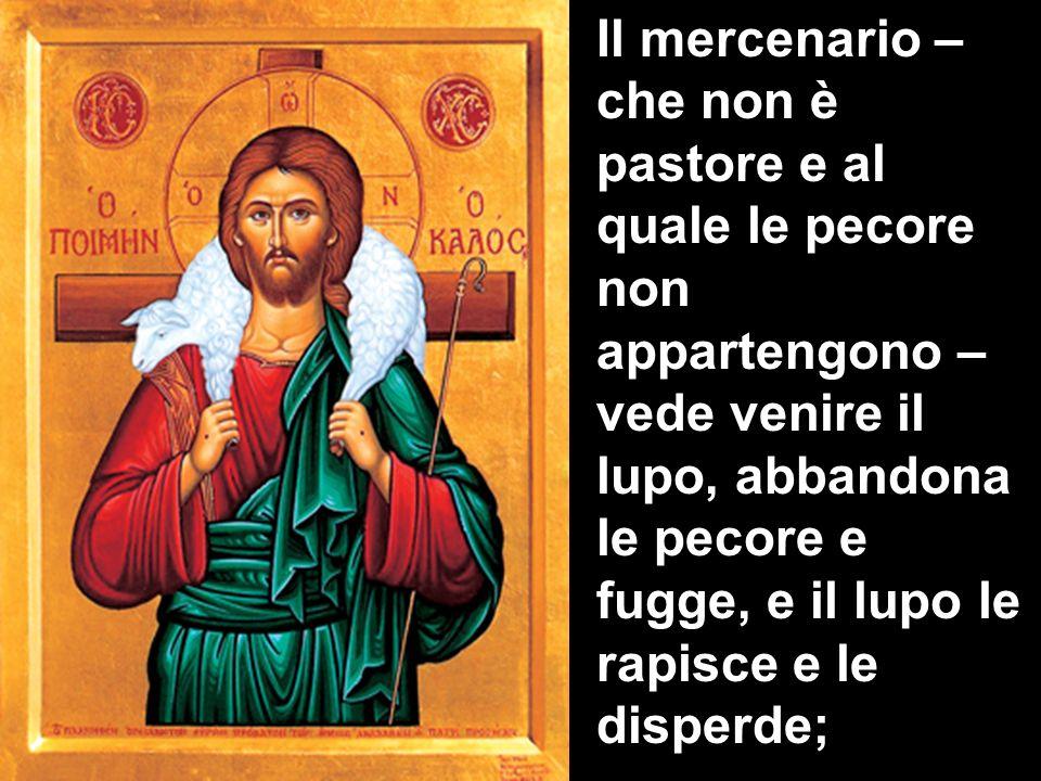 Il mercenario – che non è pastore e al quale le pecore non appartengono – vede venire il lupo, abbandona le pecore e fugge, e il lupo le rapisce e le disperde;