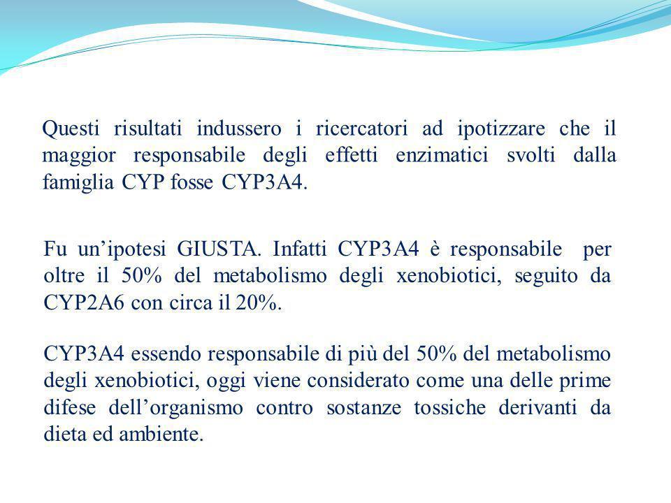 Questi risultati indussero i ricercatori ad ipotizzare che il maggior responsabile degli effetti enzimatici svolti dalla famiglia CYP fosse CYP3A4.