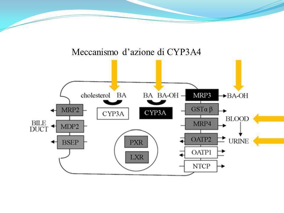 Meccanismo d'azione di CYP3A4
