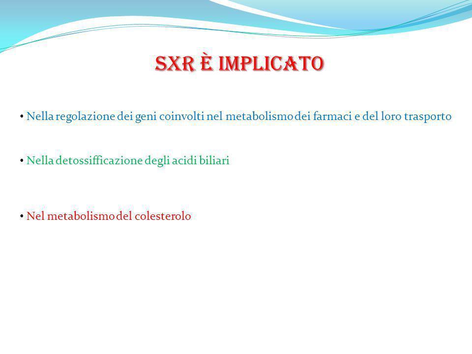 SXR è implicato Nella regolazione dei geni coinvolti nel metabolismo dei farmaci e del loro trasporto.