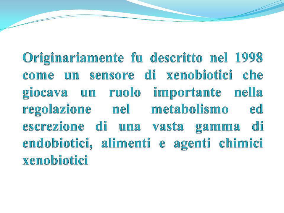 Originariamente fu descritto nel 1998 come un sensore di xenobiotici che giocava un ruolo importante nella regolazione nel metabolismo ed escrezione di una vasta gamma di endobiotici, alimenti e agenti chimici xenobiotici