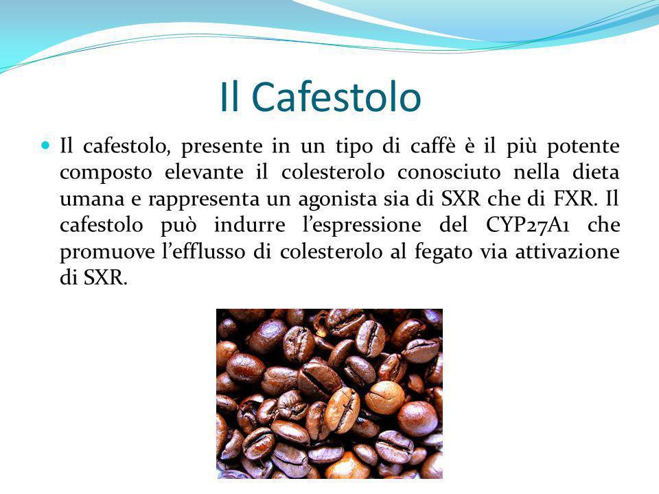 Il Cafestolo