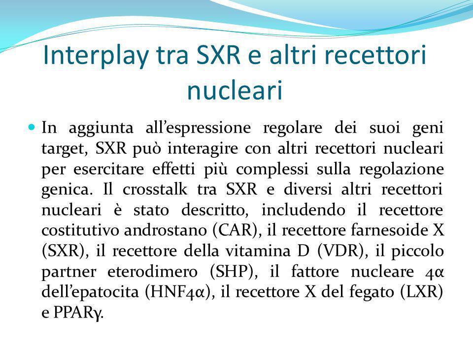 Interplay tra SXR e altri recettori nucleari