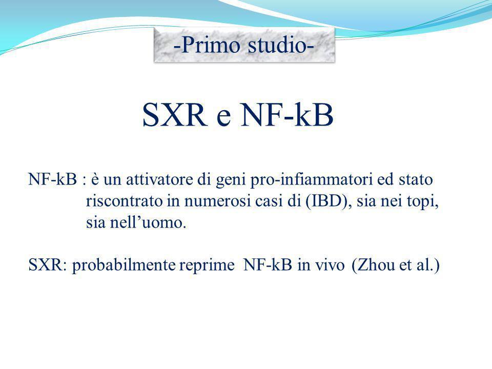 SXR e NF-kB -Primo studio-