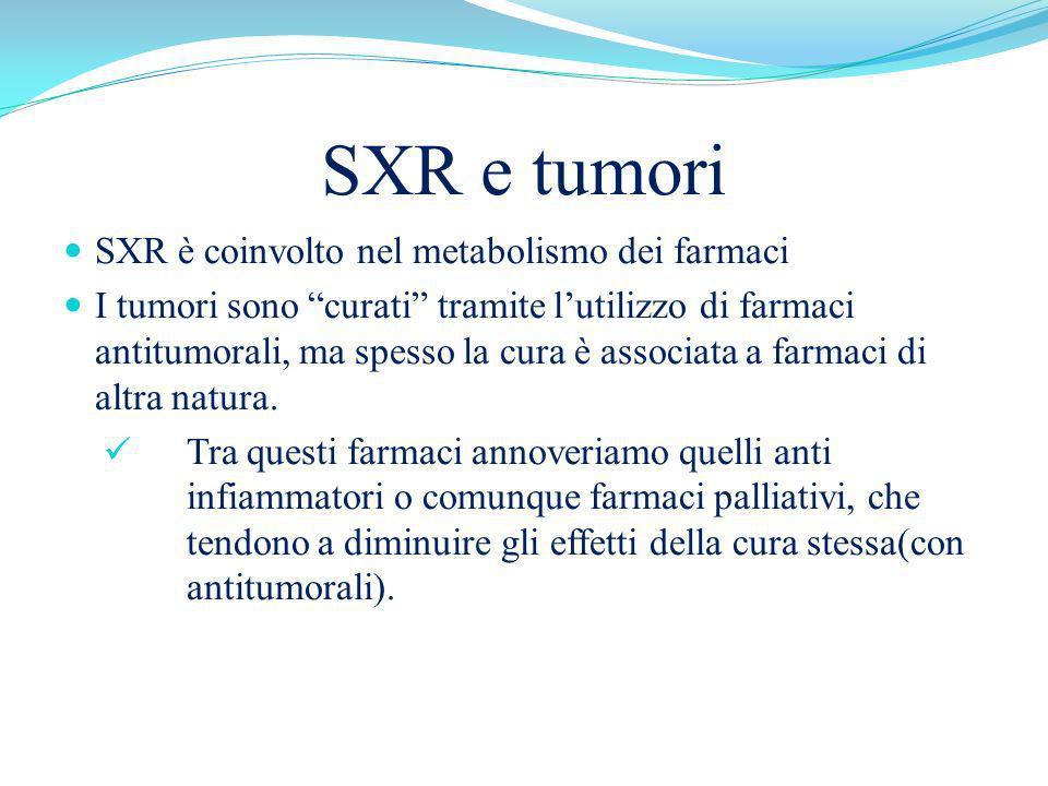 SXR e tumori SXR è coinvolto nel metabolismo dei farmaci