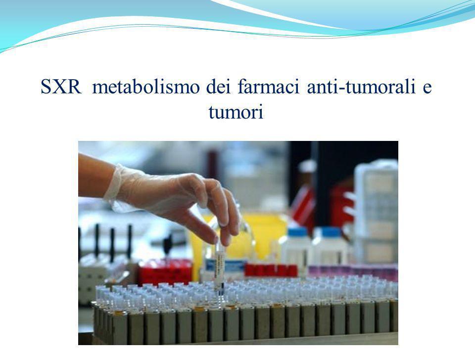 SXR metabolismo dei farmaci anti-tumorali e tumori