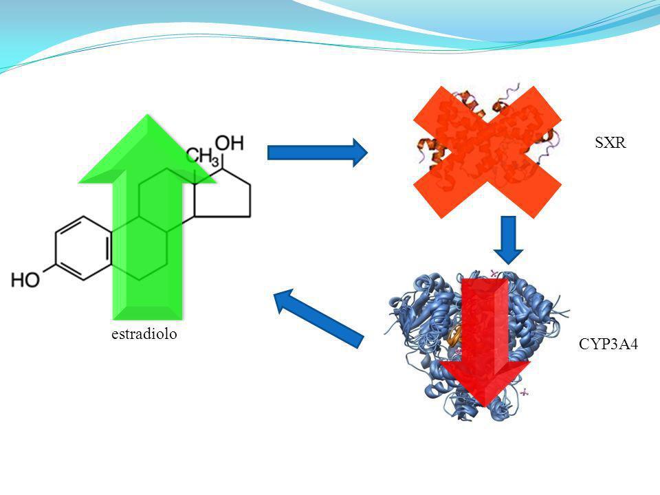 SXR estradiolo CYP3A4