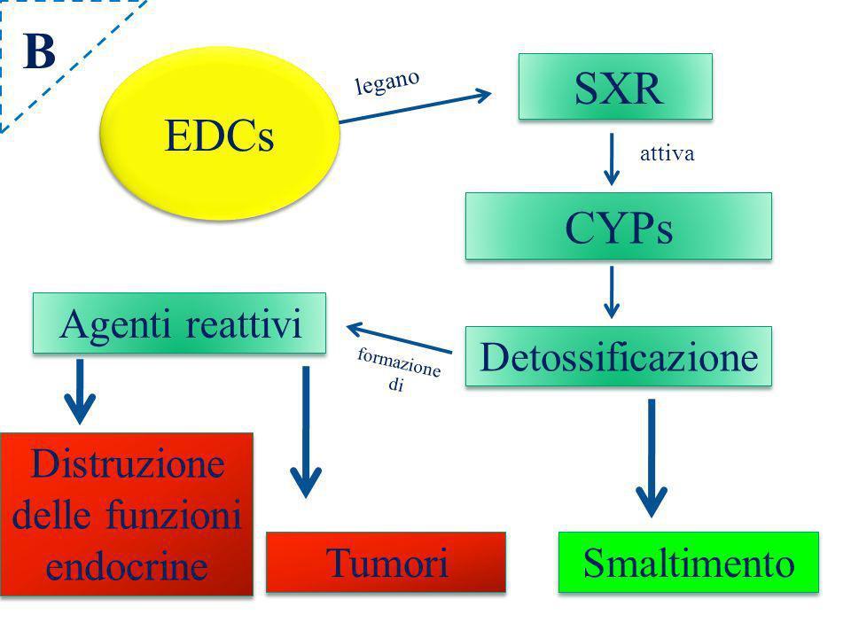 Distruzione delle funzioni endocrine