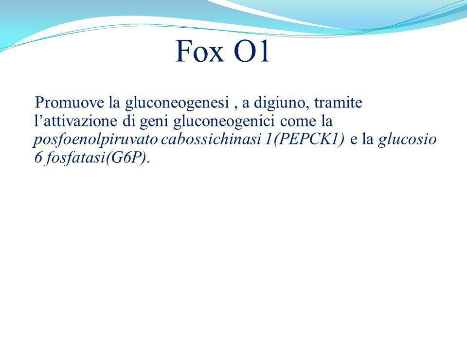 Fox O1