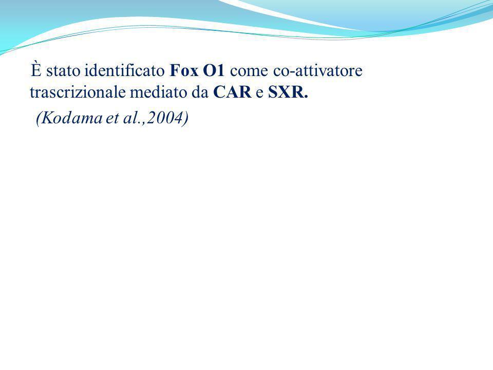 È stato identificato Fox O1 come co-attivatore trascrizionale mediato da CAR e SXR.