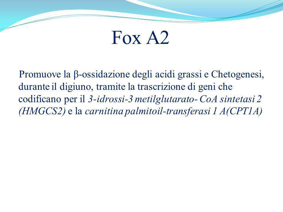 Fox A2