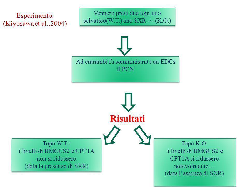 Risultati Esperimento: (Kiyosawa et al.,2004)