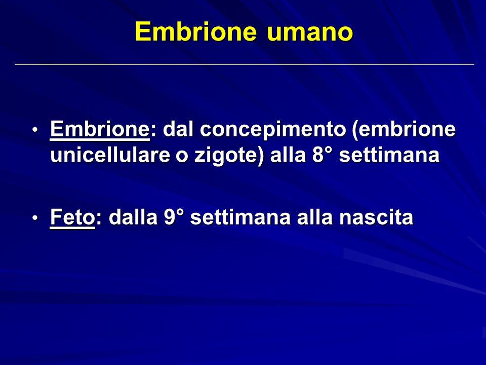 Embrione umano Embrione: dal concepimento (embrione unicellulare o zigote) alla 8° settimana.