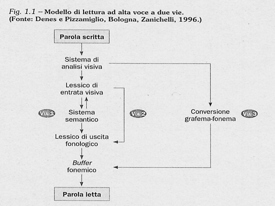 Il modello si riferisce alla lettura di parole e non contempla i processi alti .