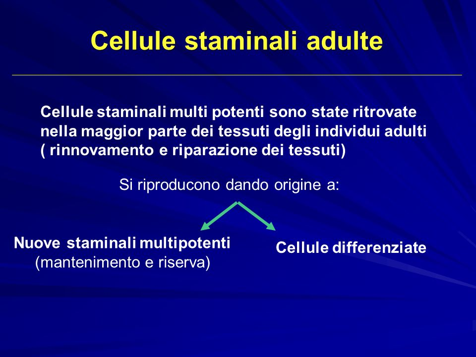 Cellule staminali adulte