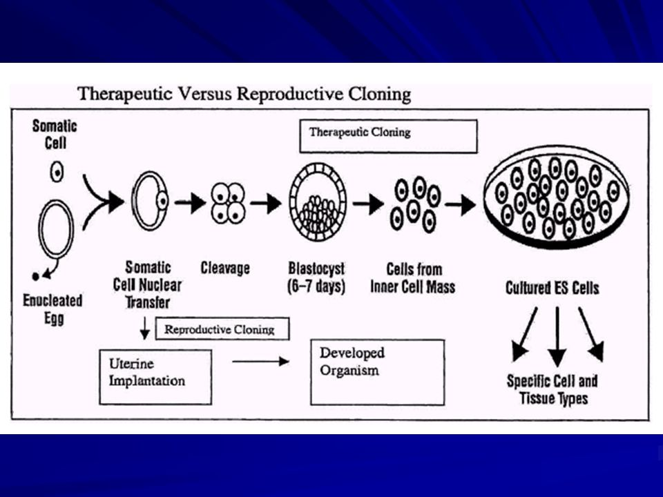 Fig 7. Contrasting therapeutic and reproductive cloning