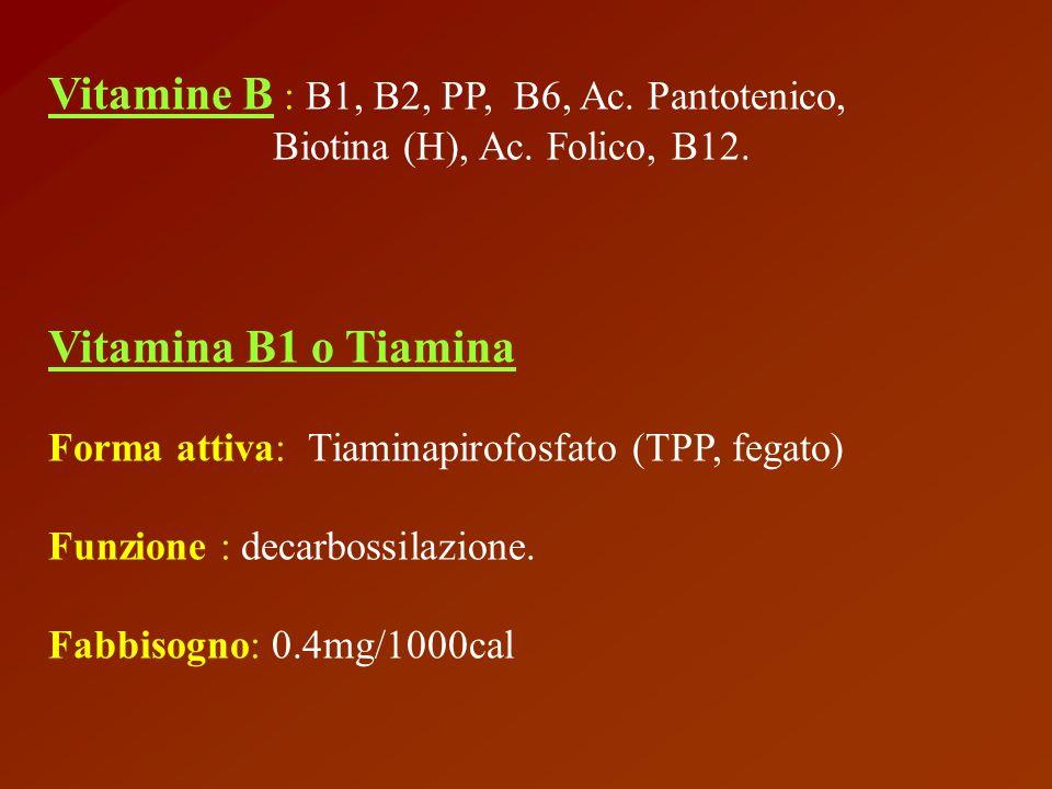 Vitamine B : B1, B2, PP, B6, Ac. Pantotenico,