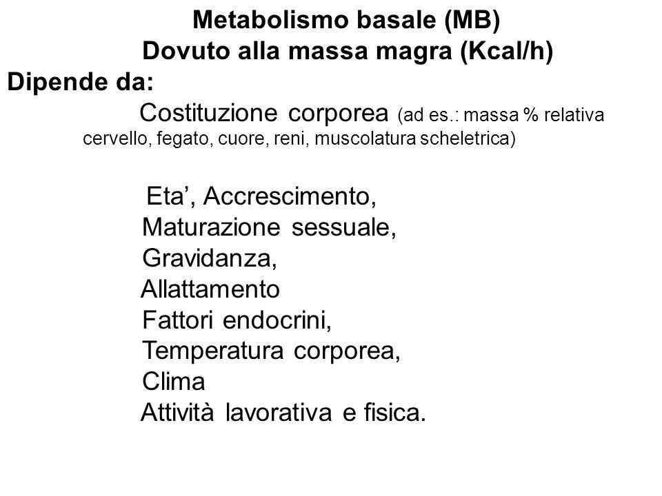 Metabolismo basale (MB) Dovuto alla massa magra (Kcal/h) Dipende da: