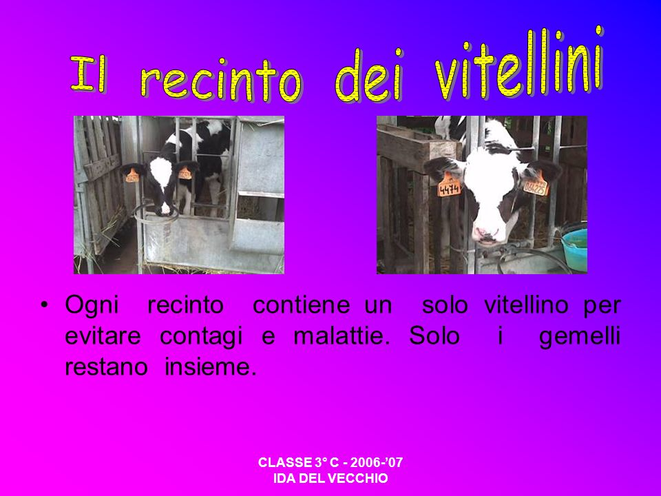 Il recinto dei vitellini