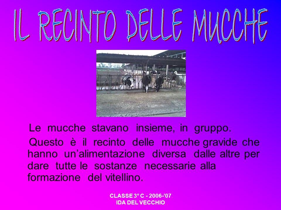 IL RECINTO DELLE MUCCHE