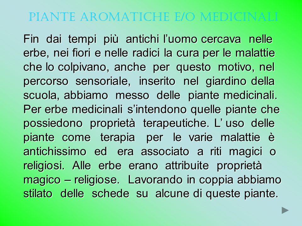 PIANTE AROMATICHE E/O MEDICINALI