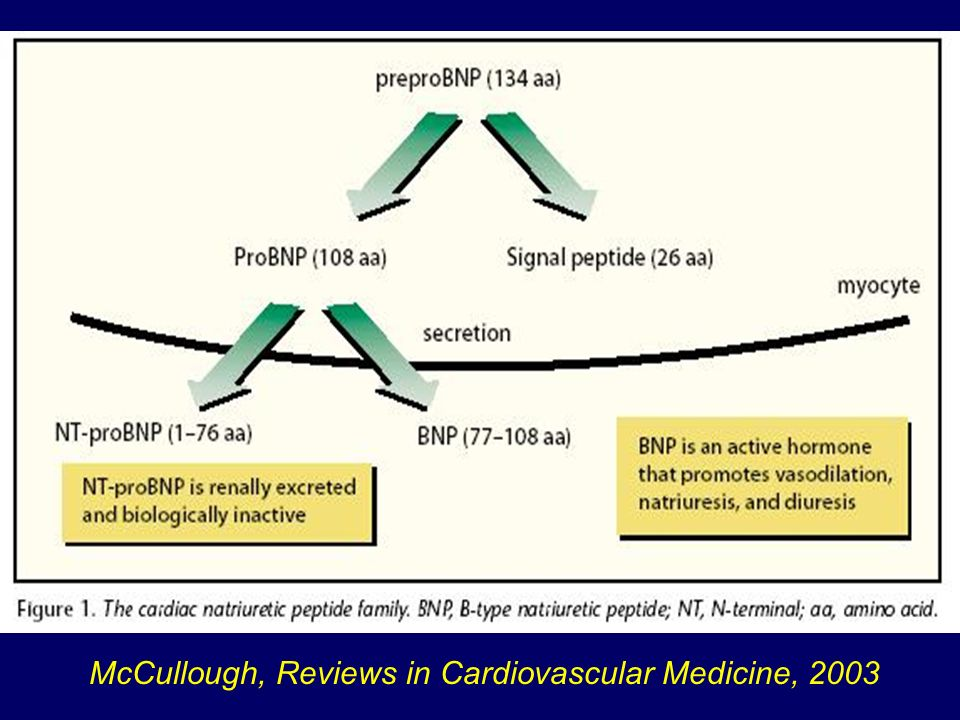 Rilascio BNP McCullough, Reviews in Cardiovascular Medicine, 2003
