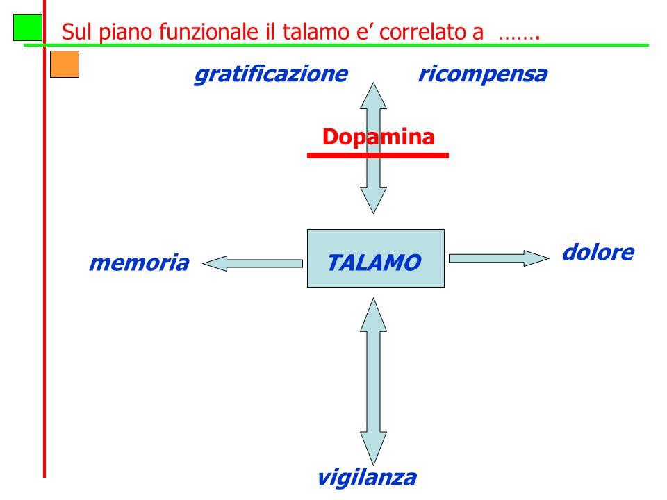 Sul piano funzionale il talamo e' correlato a …….