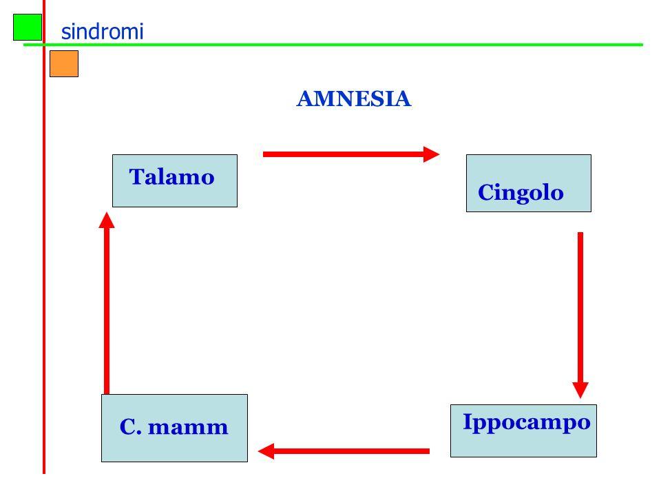 sindromi AMNESIA Talamo Cingolo Ippocampo C. mamm