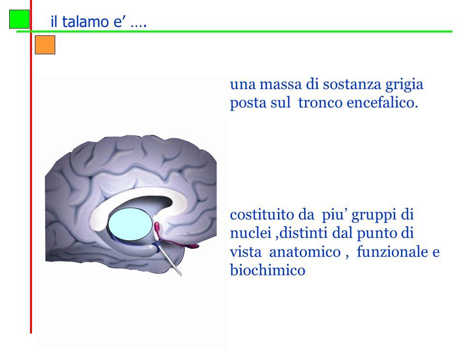 il talamo e' …. una massa di sostanza grigia posta sul tronco encefalico.