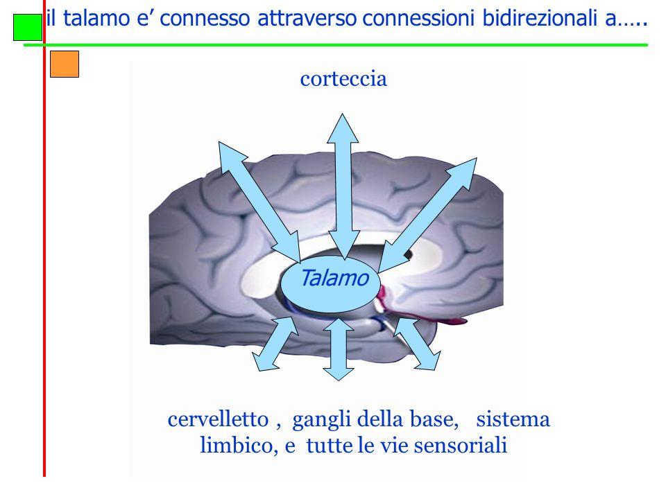il talamo e' connesso attraverso connessioni bidirezionali a…..