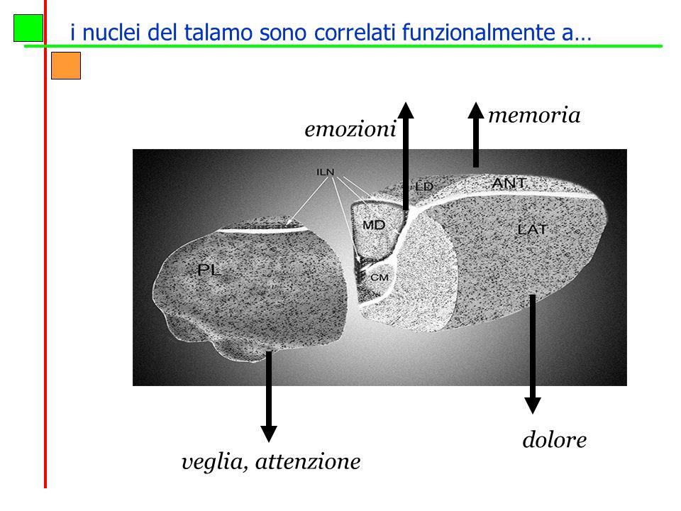 i nuclei del talamo sono correlati funzionalmente a…