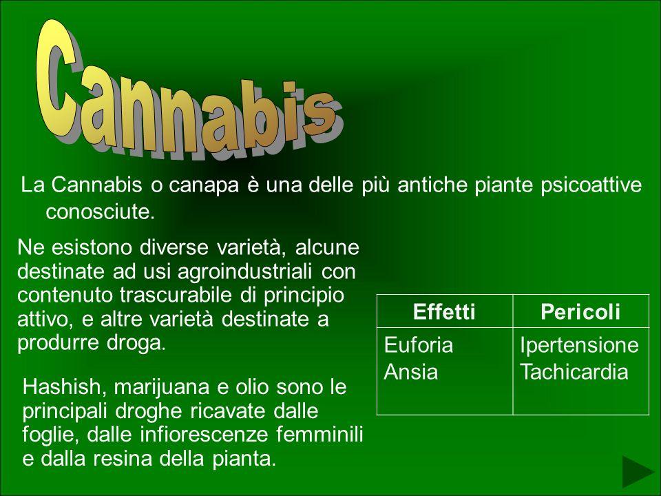 Cannabis La Cannabis o canapa è una delle più antiche piante psicoattive conosciute.