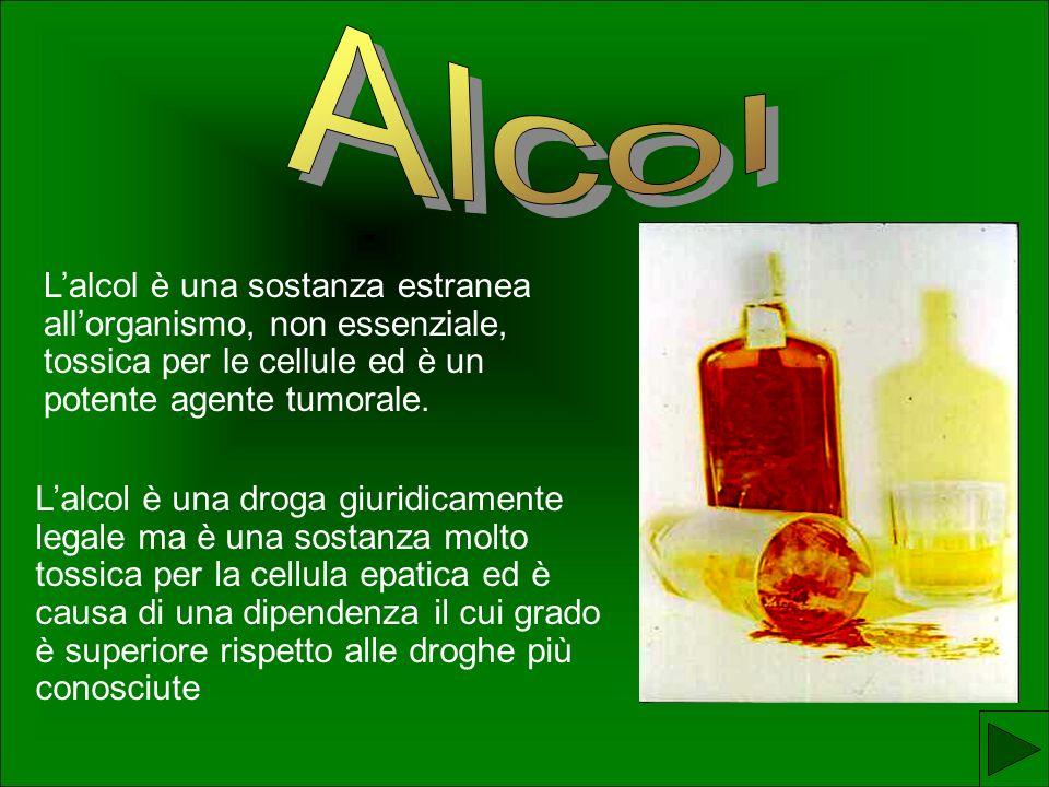 Alcol L'alcol è una sostanza estranea all'organismo, non essenziale, tossica per le cellule ed è un potente agente tumorale.
