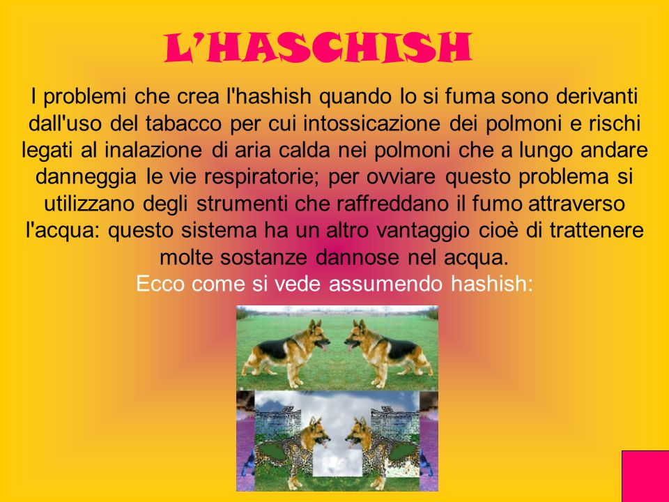 Ecco come si vede assumendo hashish: