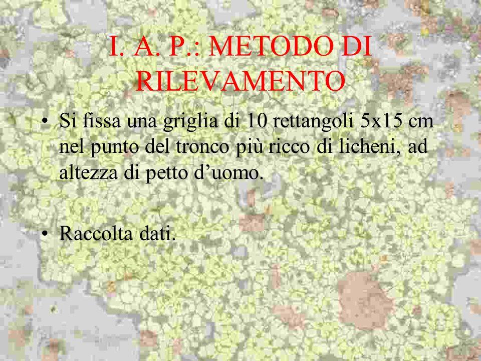 I. A. P.: METODO DI RILEVAMENTO