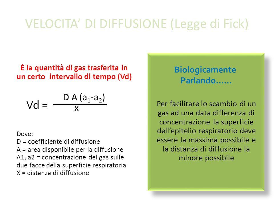 VELOCITA' DI DIFFUSIONE (Legge di Fick)