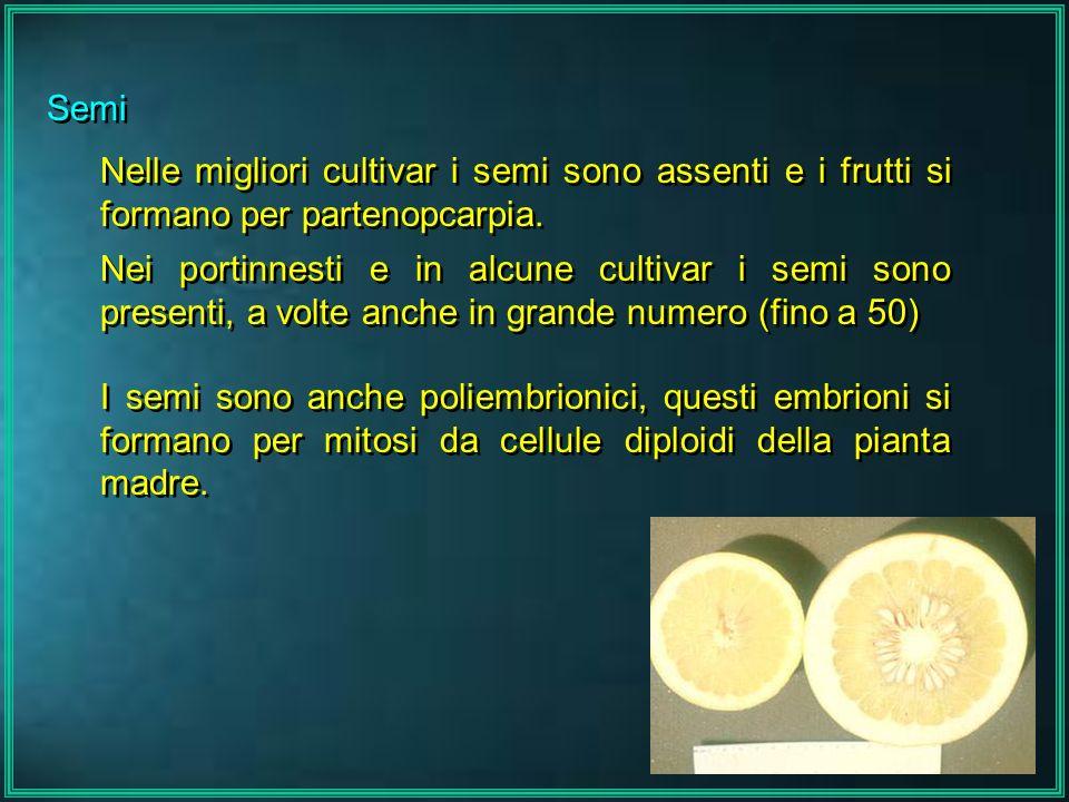 Semi Nelle migliori cultivar i semi sono assenti e i frutti si formano per partenopcarpia.