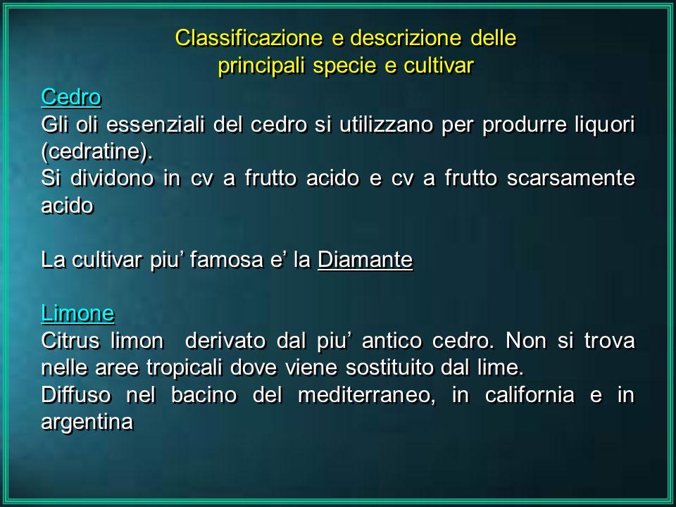 Classificazione e descrizione delle principali specie e cultivar