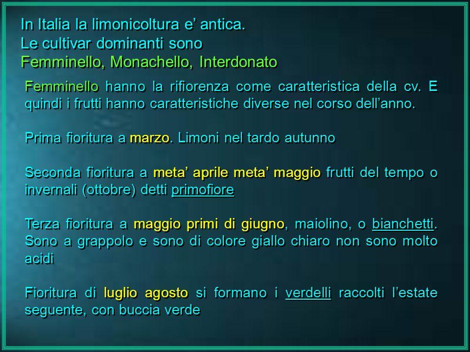 In Italia la limonicoltura e' antica. Le cultivar dominanti sono