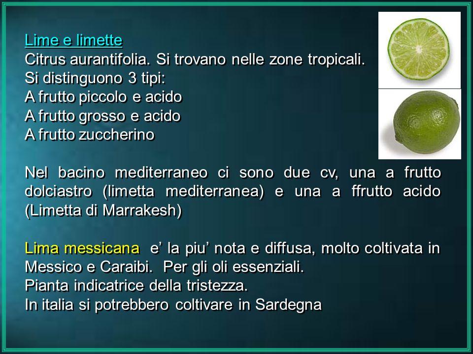 Lime e limetteCitrus aurantifolia. Si trovano nelle zone tropicali. Si distinguono 3 tipi: A frutto piccolo e acido.