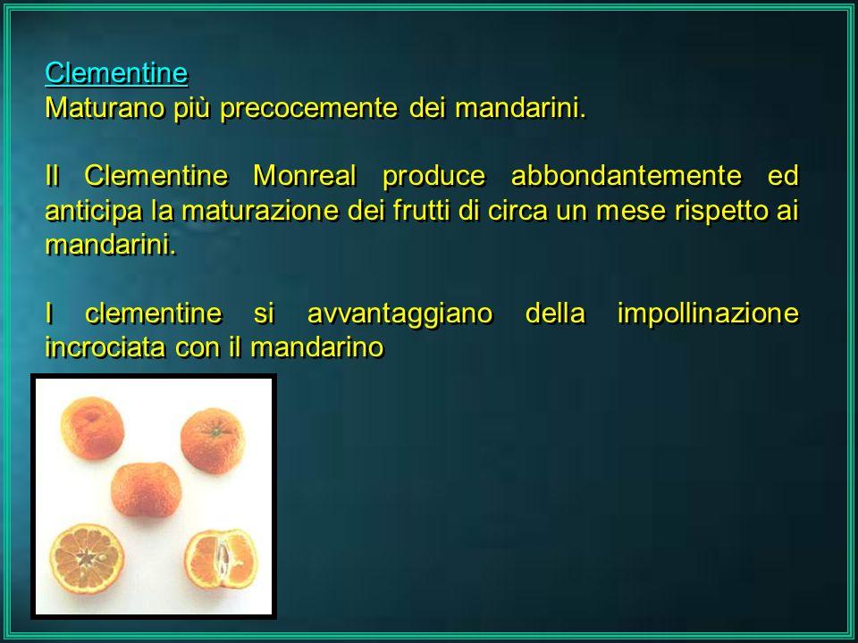 ClementineMaturano più precocemente dei mandarini.