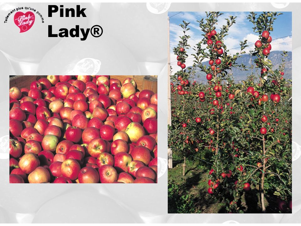 Pink Lady®