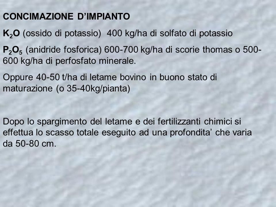 CONCIMAZIONE D'IMPIANTO