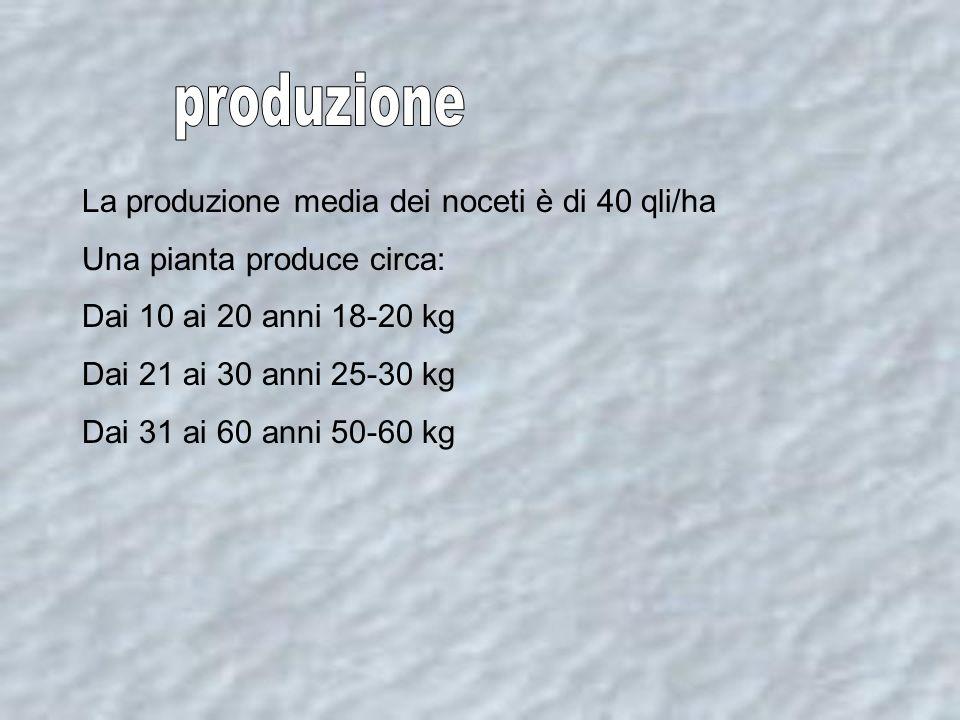 produzione La produzione media dei noceti è di 40 qli/ha